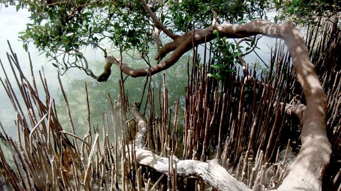 Nabq National Park