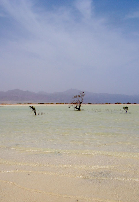 Mangroves in Nabq03