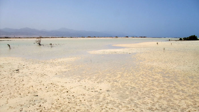 Mangroves in Nabq13