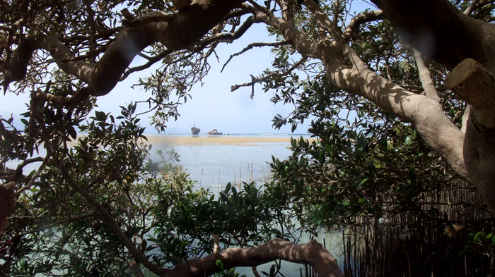 Mangroves in Nabq27